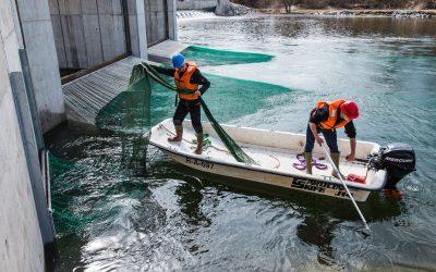 Wasserkraftwerk Au gehört zu den fischschonendsten Kraftwerken in Deutschland